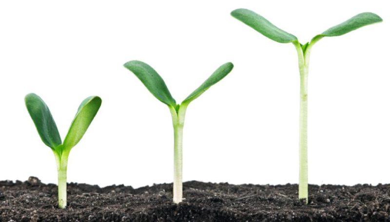 Is er een alternatief voor het model van economische groei?