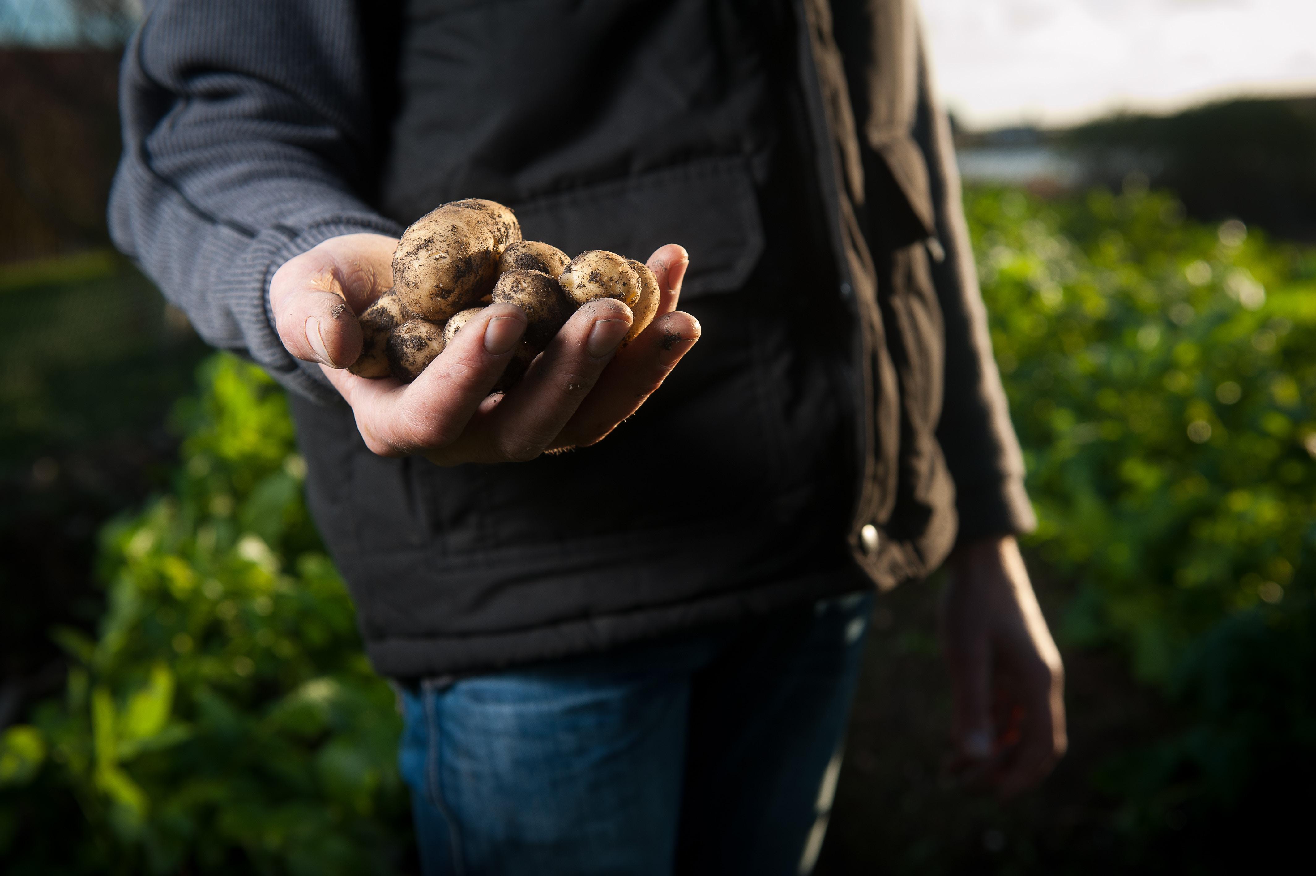 Wat is het belang van de West-Vlaamse land- en tuinbouwsector?